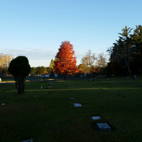 Image of cemetery in early autumn with green grass and several granite markers. There is a tree with orange leaves in the center of the picture and various green trees in the background.
